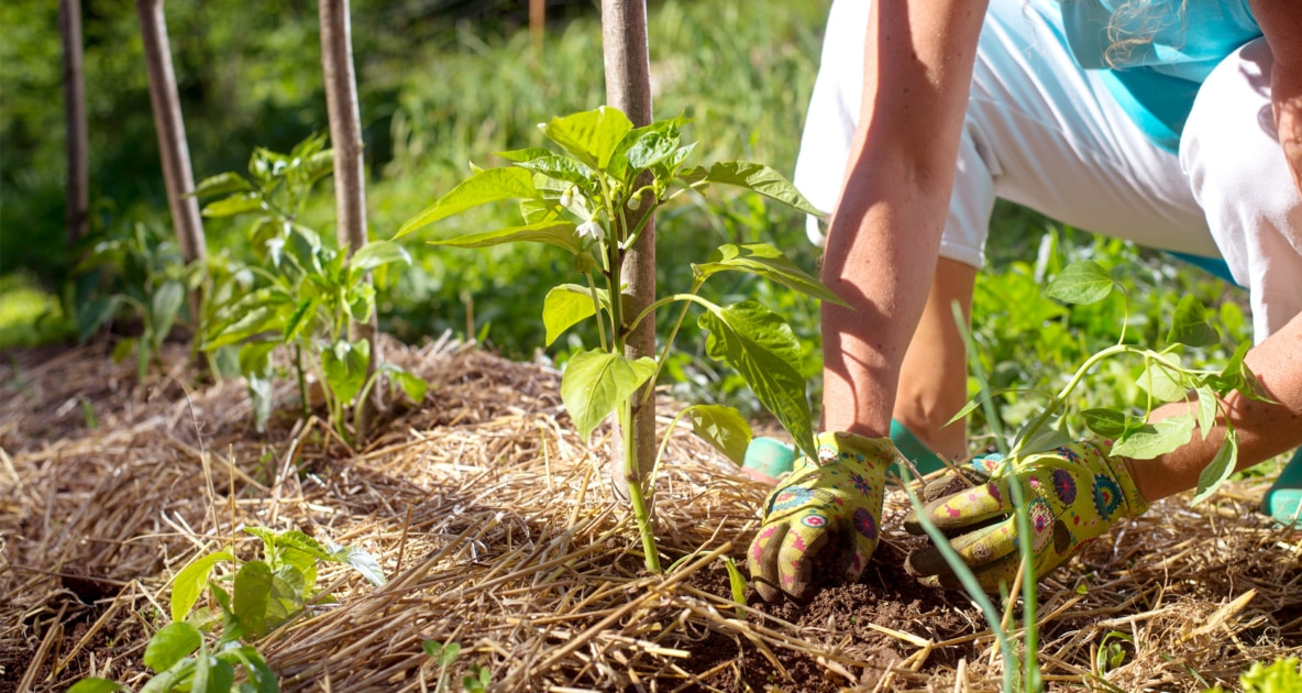 Mulch - Permaculture