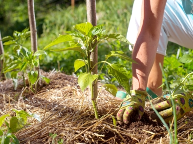 7 No-Fail Ways To Win The War on Weeds! featured image