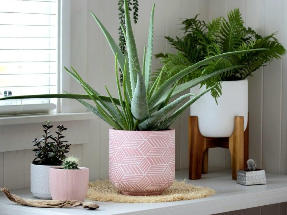 aloe Houseplant - Flowerpot