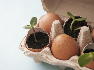 Seed Starting 101: Get Growing Now! featured image