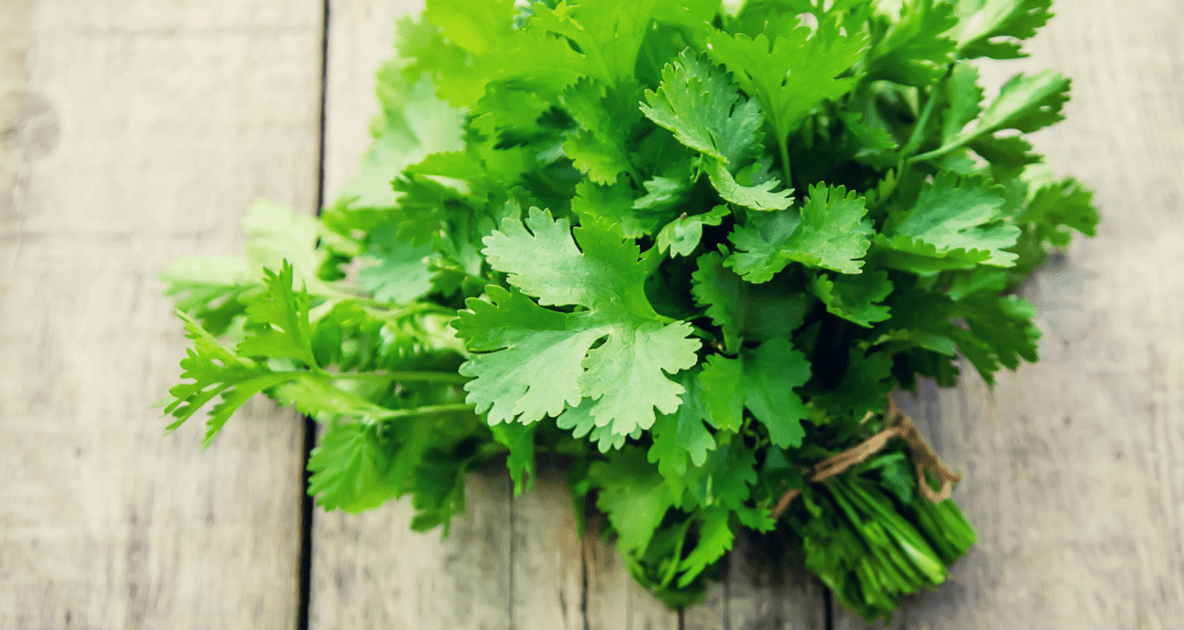 Coriander - Parsley