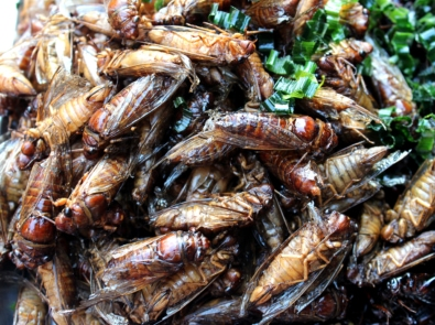 10 Best Edible Insects We Dare You To Try featured image