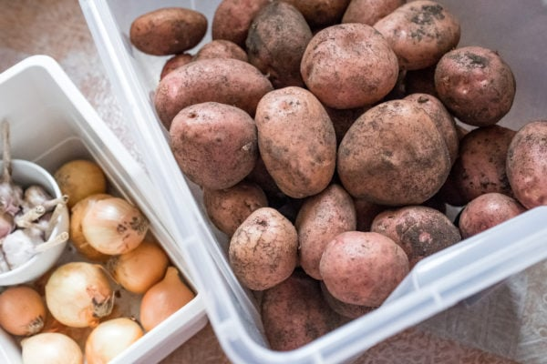 potatoes, onions, and garlic in storage bins