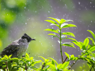 """Can Birds Predict """"Fowl"""" Weather? featured image"""