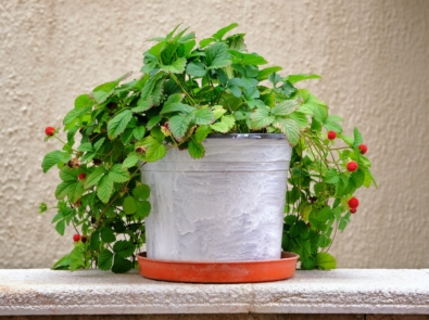 10 Easiest Fruits, Vegetables, and Herbs to Grow in Pots featured image
