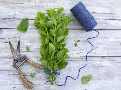 Easy Tips For Harvesting and Drying Your Own Herbs featured image