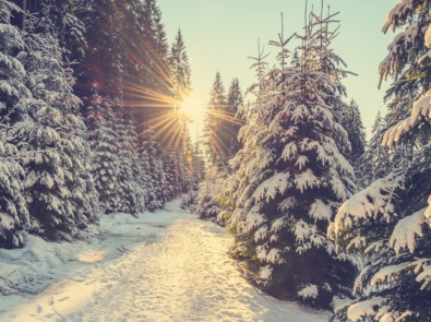 Winter Solstice 2021: When Is It, And What Is It? featured image