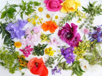10 Edible Flowers To Grow This Spring featured image