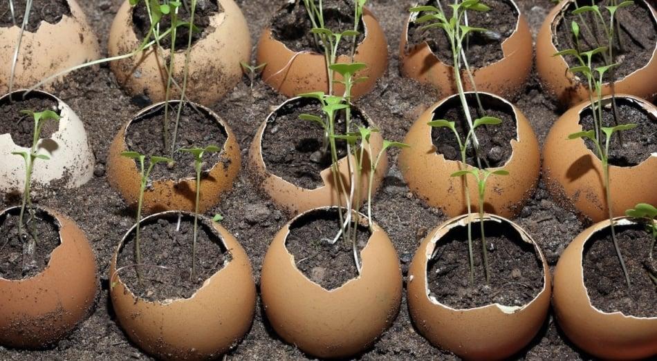 Stock photography - Soil