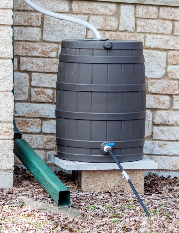 A rain barrel set up to catch rain