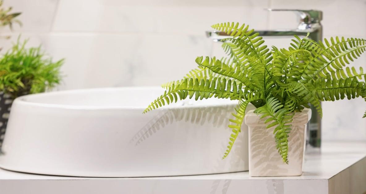 Bathroom - Houseplant