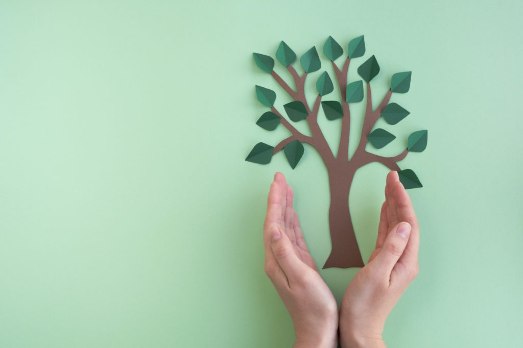 Womans hands hold tree on light green background.
