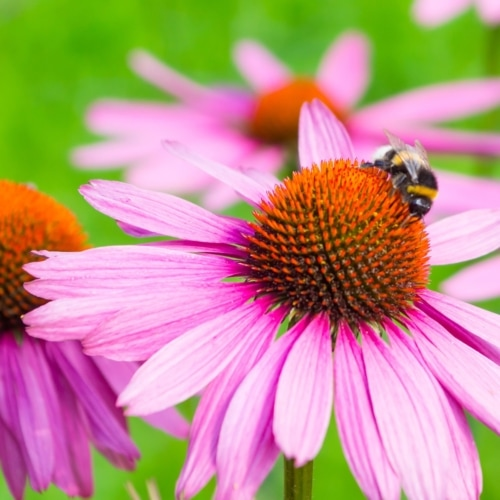 Attract Pollinators To Your Garden image