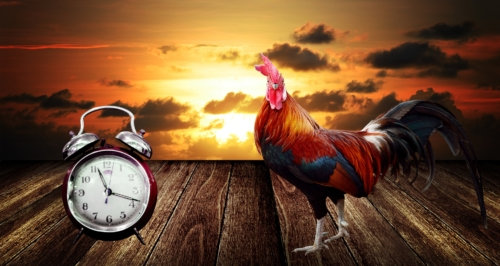 Rooster standing next to antique clock with sun setting in the background.