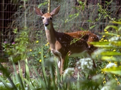 Deer repellent - for a deer standing in the woods, shown in this photo