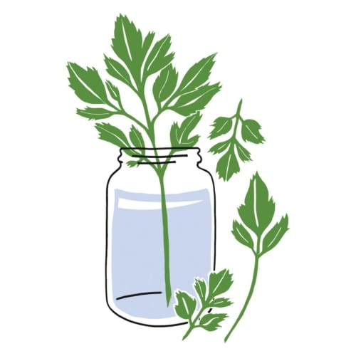 Tip For Storing Fresh Asparagus image