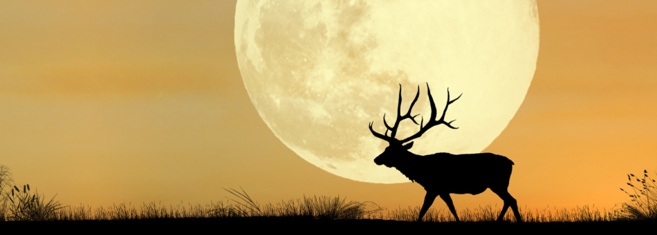 A silhouette of a deer walks past a full moon appearing over the horizon.