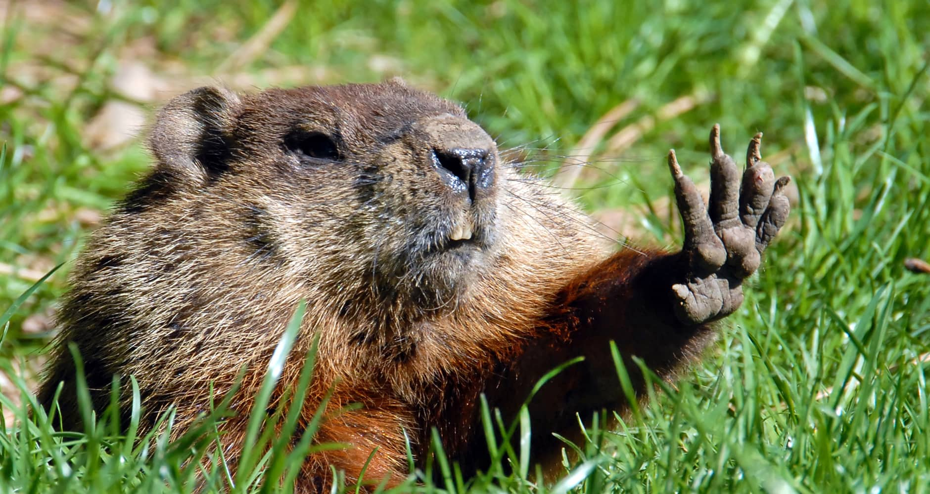 groundhog day folklore