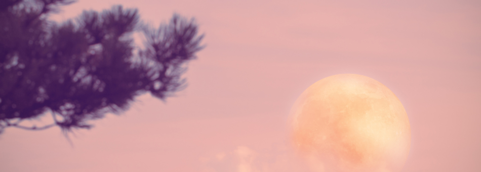 Hazy full moon appearing near a pine tree against a pink sky.
