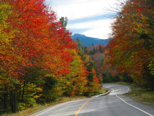 Trees with autumn colored leaves along Kancamagus Scenic Highway in the White Mountains of New Hampshire.