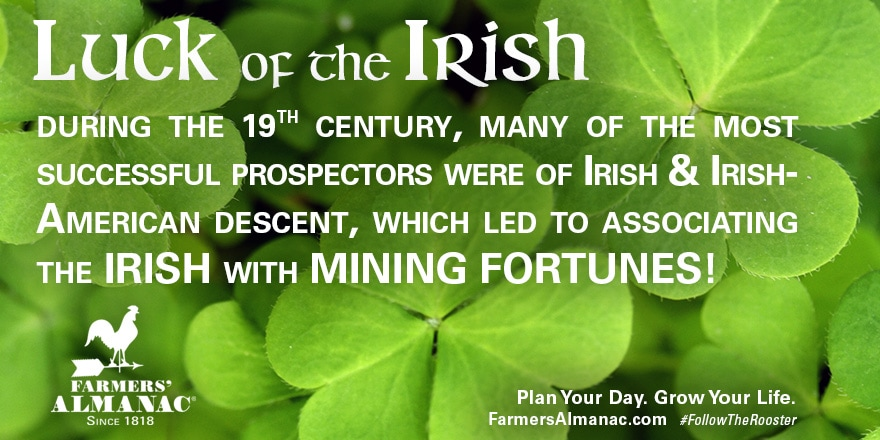 Banner discussing the origins of the Luck of the Irish.