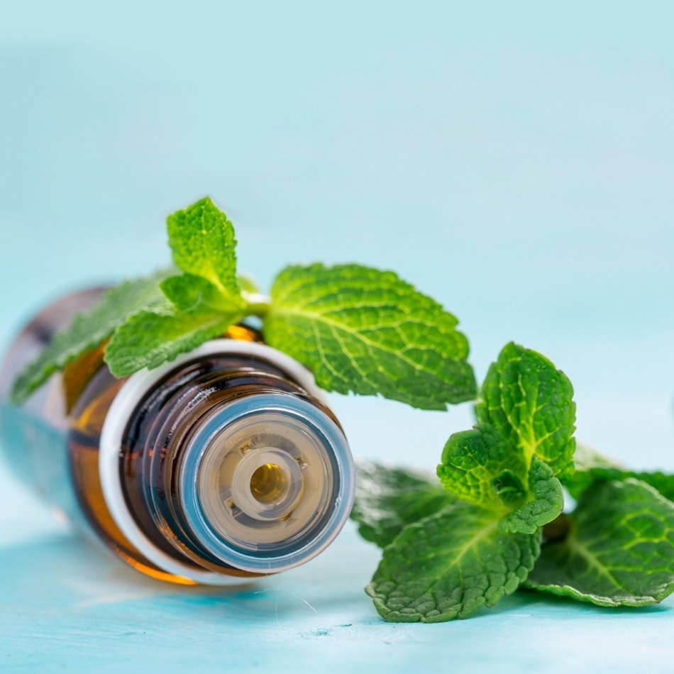 Peppermint - Peppermint extract