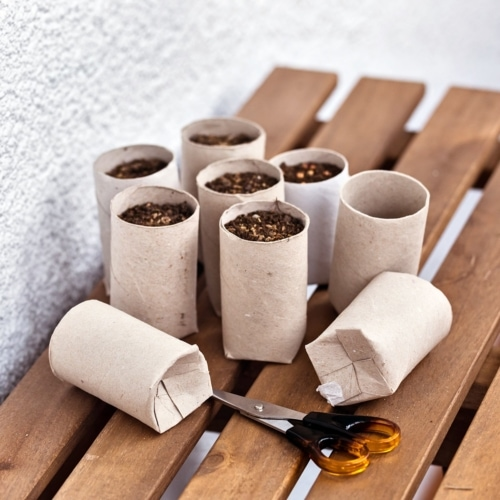 Make Seed Starters From TP Tubes! image