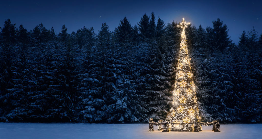 A lone decorated and lit Christmas Tree stands in front of a dark, snowy forest.