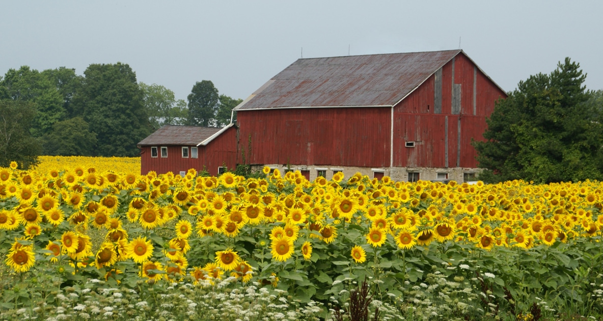 Field - Barn