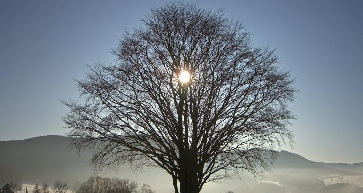 Winter solstice - Solstice
