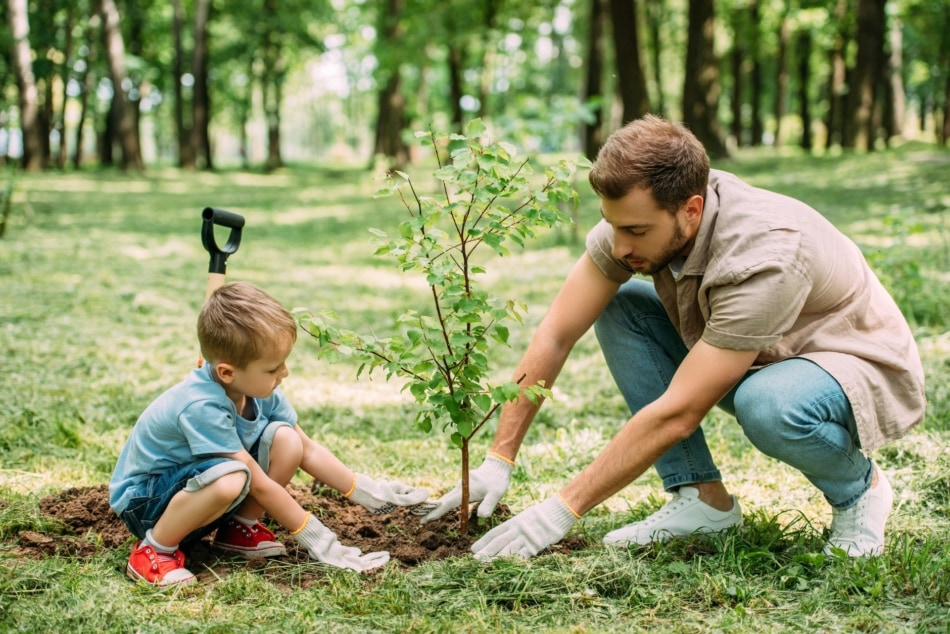 Side view of father and son planting tree at park.
