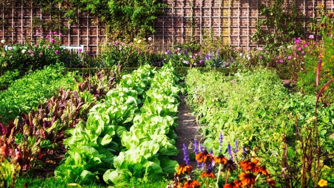 Kitchen garden - Garden