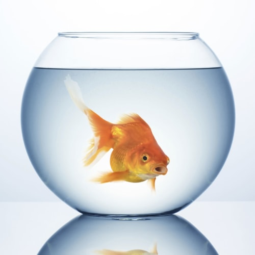 Reuse Fish Bowl/Tank Water image
