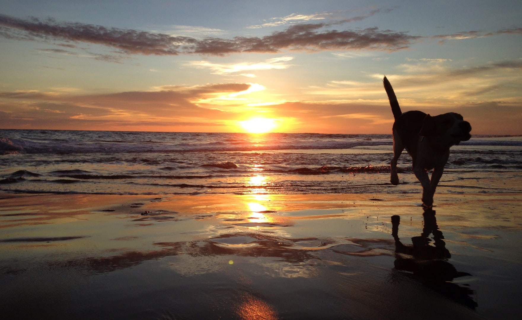 dog on the beach with sun setting in background