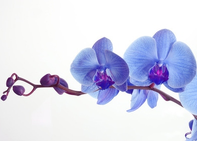 Orchid Care for Everyone! featured image