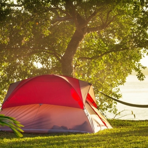 Don't Let Your Tent Get Moldy Or Musty image