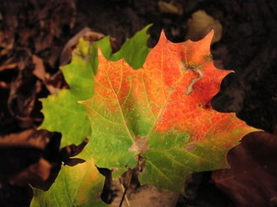 What Causes Leaves to Change Color? featured image