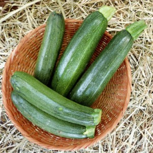 Zucchini Picking Best Practicesimage preview