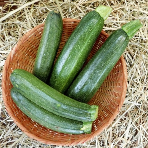 Zucchini Picking Best Practices image