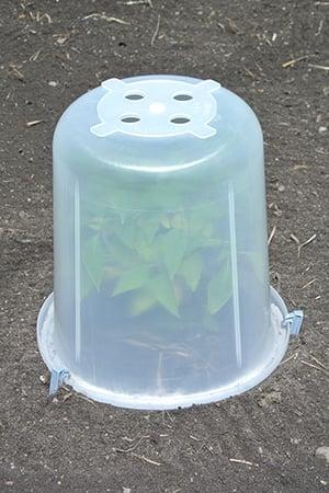 Greenhouse - Plastic
