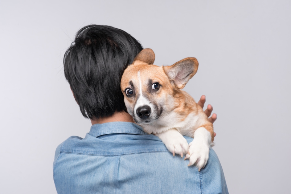 Yorkshire Terrier - Cat