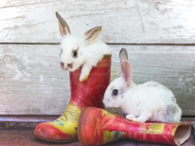 Can Bunnies Predict the Weather? featured image