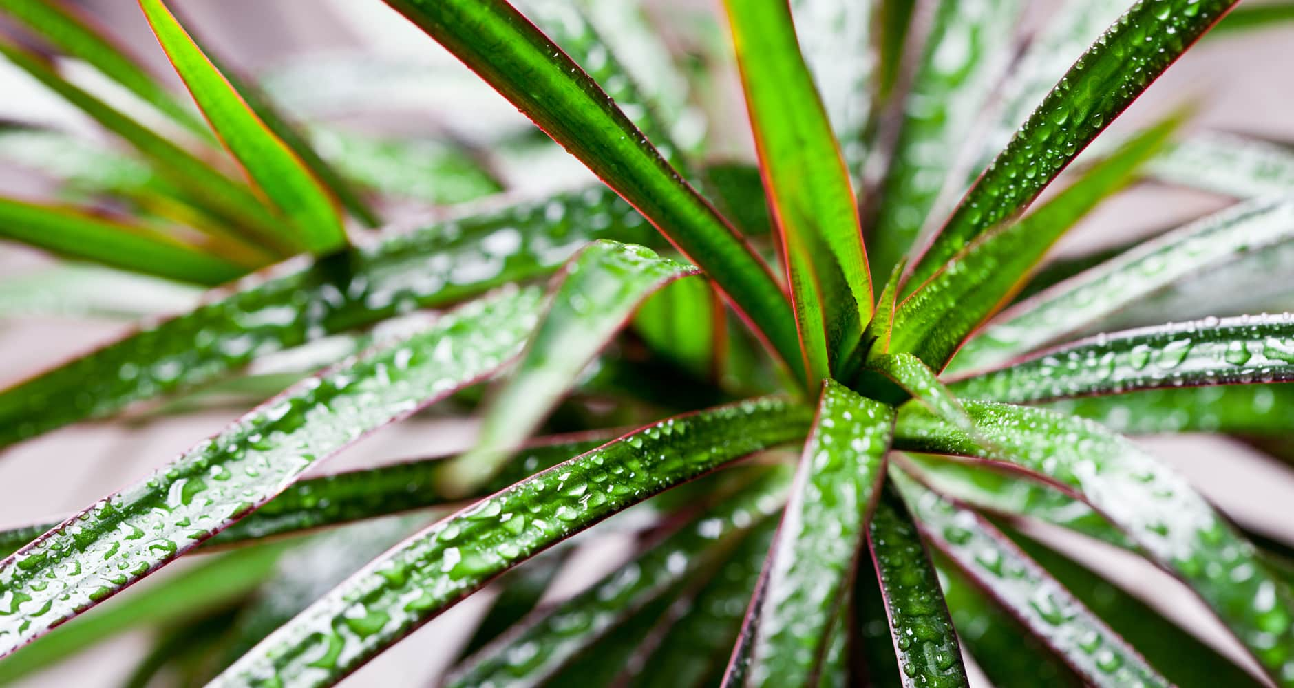 The Best Air Purifying Houseplants, According to NASAimage preview