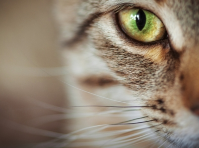 10 Unusual Facts About Cats You Didn't Know featured image