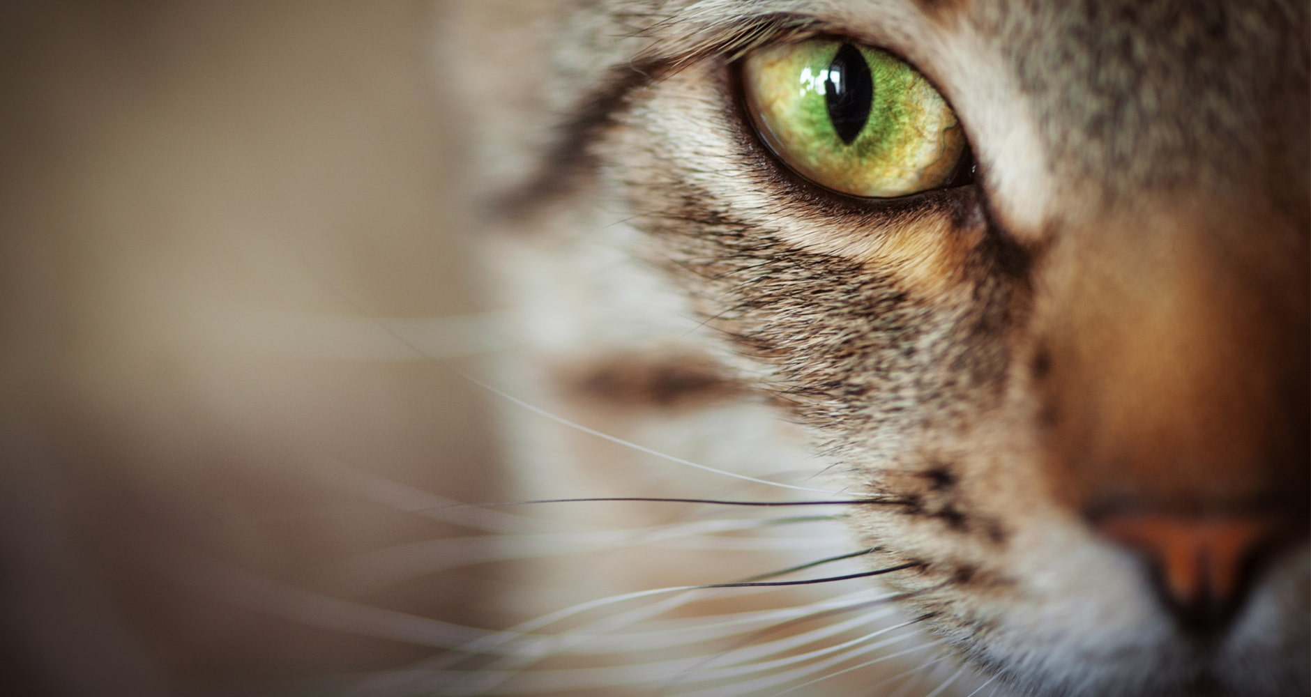10 Unusual Facts About Cats You Didn't Knowimage preview