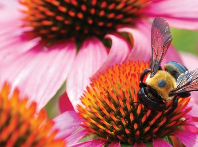 Wildlife Gardening: Create A Refuge For Birds, Bees, And Other Creatures featured image