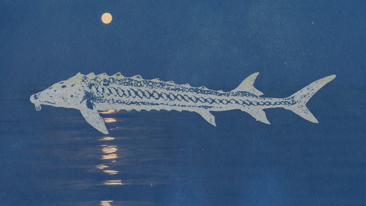 August's Full Sturgeon Moonimage preview