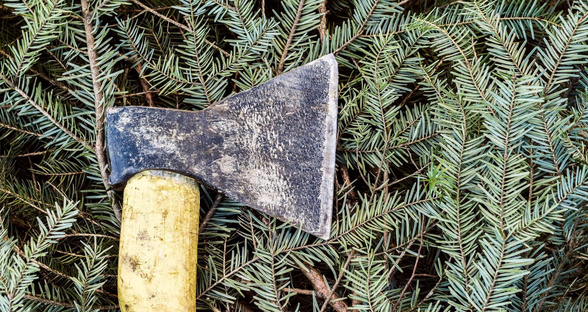 When Is The Best Time to Cut Your Own Christmas Tree?image preview