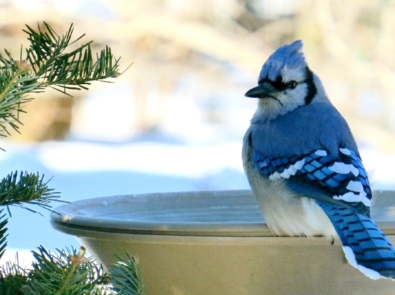 6 Easy Tips to Keep Your Bird Bath From Freezing featured image