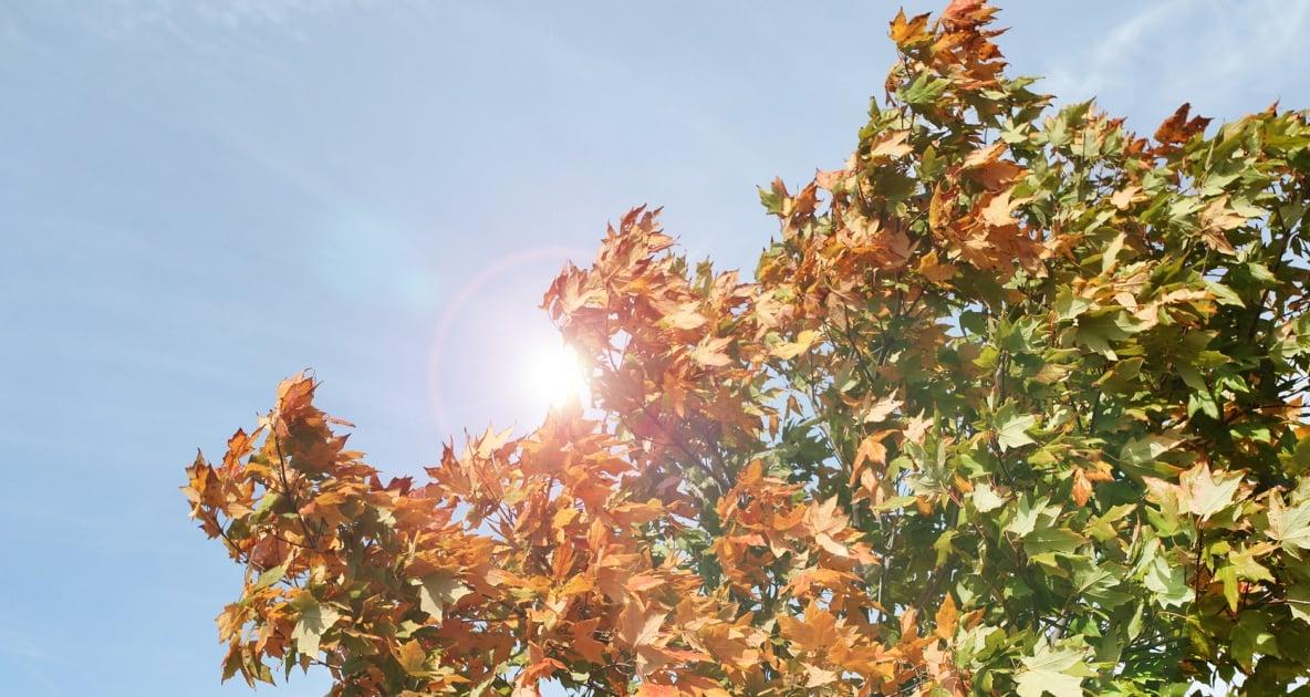 Leaf - Rain